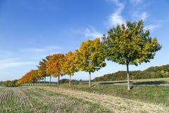 与胡同、领域和森林的全景风景 免版税图库摄影