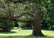 与胳膊的树 库存照片