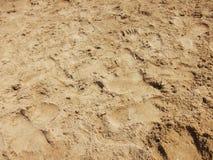 与脚印的沙子海滩 库存照片