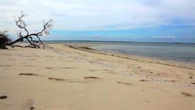 与脚步的遥远的海滩在沙子 股票视频