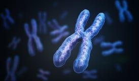 与脱氧核糖核酸分子的X染色体 遗传学概念 3d被回报的例证 库存图片