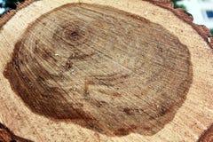 与腐烂的核心的砍的树 一棵老树的裁减 腐烂在桶的中心在木头位置 免版税库存照片