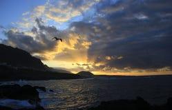 与腾飞在大西洋的天空的海鸥的美好的日落在加拉奇科,特内里费岛镇  免版税库存照片