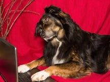 与膝上型计算机的狗 库存照片