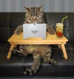 与膝上型计算机的猫在沙发 图库摄影