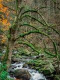 与自来水的小河 库存照片