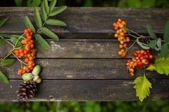 与自然元素的秋天老木背景:锥体、花楸浆果、红色莓果和叶子 免版税库存照片