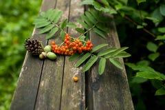 与自然元素的秋天老木背景:锥体、花楸浆果、红色莓果和叶子 免版税库存图片