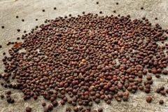 与自然光的咖啡种子 库存照片