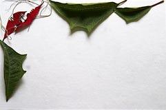 与自然叶子和花的角落的圣诞卡片 免版税库存照片
