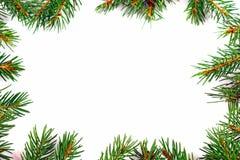 与自然杉树分支的圣诞节框架 免版税库存照片