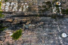 与自然样式和镇压的老木纹理作为背景的表面上 从中心变暗 免版税库存图片
