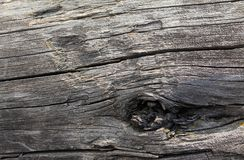 与自然样式的老木纹理 在树背景里面 老脏和被风化的灰色木墙壁板条 库存照片