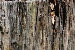 与自然样式的老木纹理崩裂了 库存图片