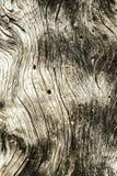 与自然样式的老木纹理 库存图片