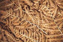 与自然样式的背景摘要的老烘干叶子 植物分支纹理在森林里 库存图片