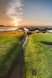 与自然渠道的绿色青苔和日落背景 库存图片