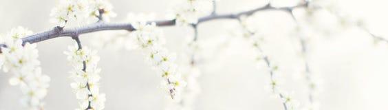 与自然的横幅开花背景-网倒栽跳水模板 免版税库存图片