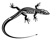 与自然的黑色蜥蜴 库存照片