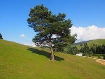 与自然秀丽的简单的图片  库存照片