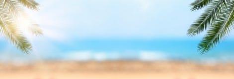 与自然绿色棕榈叶的抽象暑假和假日背景在bokeh热带海挥动 复制vacatio的空间 库存图片