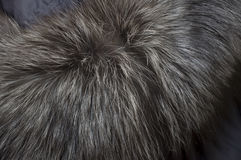 与自然长的灰色毛皮的背景 免版税库存图片