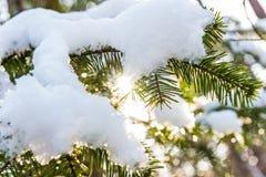 与自然霜的圣诞节背景 库存图片