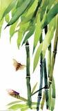 与臭虫和飞行例证传染媒介的水彩竹子 库存例证