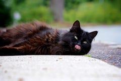 与舌头的猫 免版税图库摄影