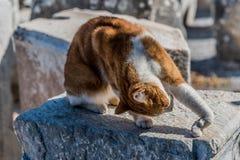 与舒展姿势的离群猫 免版税库存照片
