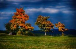与色的叶子的三棵槭树在一个草甸秋天/秋天白天 库存照片