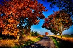 与色的叶子的槭树沿柏油路秋天/秋天白天 免版税图库摄影