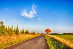 与色的叶子的槭树沿柏油路秋天/秋天白天 库存照片