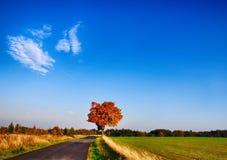 与色的叶子的槭树沿柏油路秋天/秋天白天 免版税库存图片