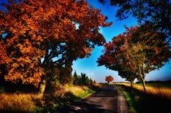 与色的叶子的槭树沿柏油路秋天/秋天白天 图库摄影