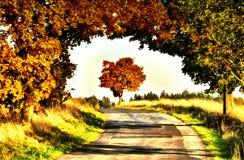 与色的叶子的槭树沿柏油路秋天/秋天白天 免版税库存照片