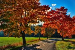 与色的叶子的槭树沿柏油路秋天/秋天白天 库存图片