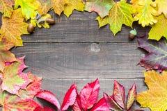 与色的叶子的秋天背景在土气木背景 免版税库存图片