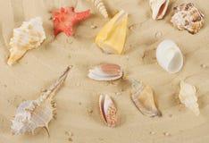 与色的壳和海星的背景 图库摄影