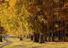 与色的树的秋天风景 免版税库存图片