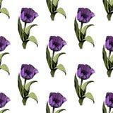 与色的桃红色郁金香的无缝的背景 r 与五颜六色的郁金香的花卉无缝的背景 r ?treadled 皇族释放例证