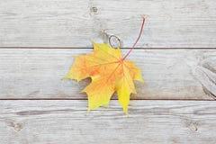 与色的槭树的秋天背景在老木板离开 图库摄影