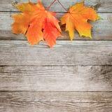 与色的槭树的秋天背景在老木板离开 免版税库存图片