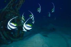 与色的珊瑚的鱼 免版税库存图片