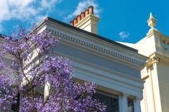 与艺术装饰大厦的开花的兰花楹属植物树在backgroun 图库摄影