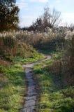 与芦苇、被践踏的道路和明白蓝色sk的领域的10月风景 库存照片