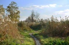 与芦苇、被践踏的道路和明白蓝色sk的领域的10月风景 库存图片