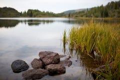 与芦苇和岩石的平静的湖场面 免版税库存照片