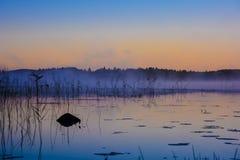 与芦苇和水厂的有雾的湖岸 免版税库存图片