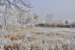 与芦苇的冰冷的沼泽 免版税图库摄影